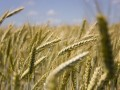 国内种子企业的品牌打造状况堪忧