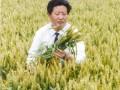 郑天存-小麦高产育种家
