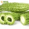 绿色蔬菜  苦瓜