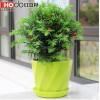 红豆集团红豆杉苗绿植盆景创意植物花卉室内办公室绿植带盆栽好