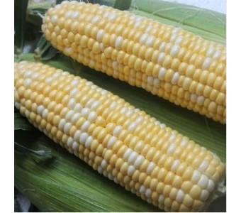 甜玉米云南新鲜玉米现摘 新鲜甜玉米 水果玉米 甜脆玉米