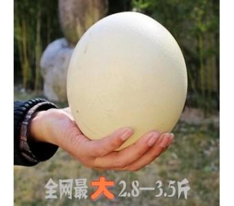 芝宇鸵鸟蛋新鲜 非洲特产单个3斤自家养殖高钙高营养低胆固醇礼品