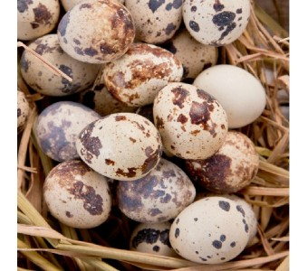 新鲜鹌鹑蛋/鹑鸟蛋/鹌鹑卵/蛋