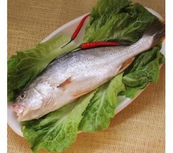 东海一招鲜 新鲜 鲜活 黄山鱼 小白花 大陈岛深海网箱养殖