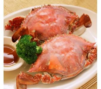 东海一招鲜 野生鲜活 红膏 梭子蟹 膏蟹 鲜活母满黄 母蟹 包肥