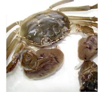 崇明 大闸蟹 河蟹 螃蟹 小螃蟹 新鲜 鲜活水产品 海鲜 河鲜