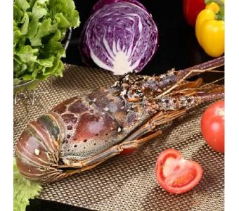 巴西龙虾 生冻大龙虾 送礼自用首选 聚餐必备