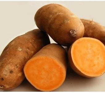 皮黄壤黄心红薯 番薯 绿色有机减肥保健 味道香甜粉儒