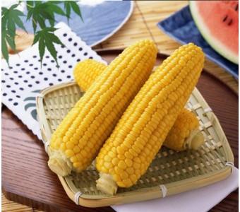 新鲜水果玉米棒 甜玉米 连皮
