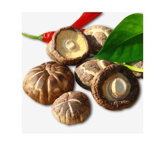 椴木野生小香菇