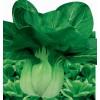 绿青(青菜种子)