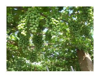 有料厨房 新农人是中国绿色生态农业的未来 (282播放)