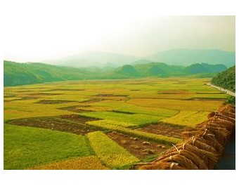 金色的种子希望的田野——河南滑丰种业 (250播放)