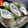 生蚝 牡蛎新鲜烤生蚝鲜活批发海蛎子