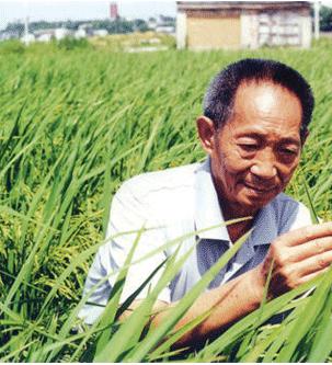 袁隆平该不该放下杂交水稻