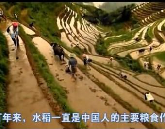 高大上水稻病害防治广告——阿米妙收 (286播放)