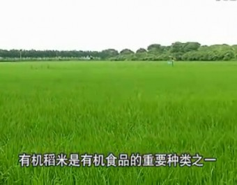 有机水稻栽培技术 (157播放)