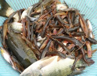 水产养殖淡水鱼的养殖技术 (142播放)