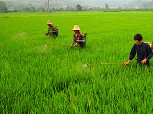 我国主粮作物肥料40%来自配方肥