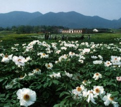 铜陵凤凰山景区 (4)