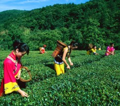 柴埠溪原生态农家乐二日游 (1)