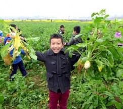 青白江杏花节 和孩子体验农家生活 (3)