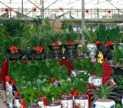 北京东方美都花卉市场 (1)
