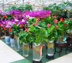 北京京东第一花卉市场 (1)
