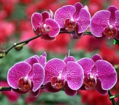 北京元都花卉市场 (1)