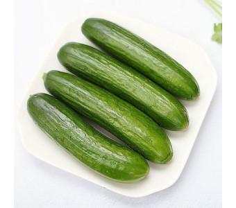 有机蔬菜新鲜水果黄瓜农产品荷兰小黄瓜