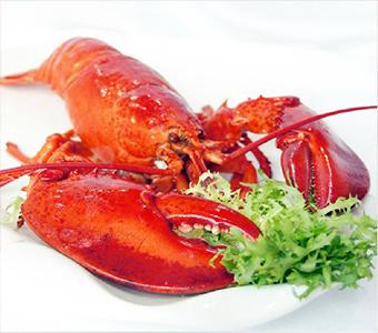 波士顿龙虾 水产海鲜 进口波龙 速冻大龙虾