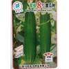 供应翠绿8号—黄瓜种子