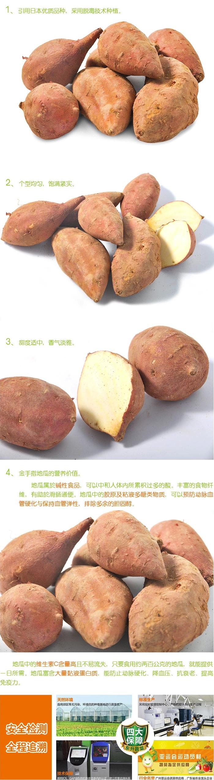 东升农场新鲜红薯