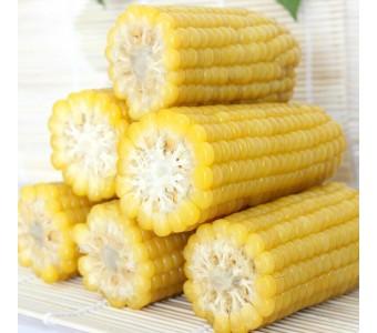 新鲜玉米 黄玉米棒整箱18根