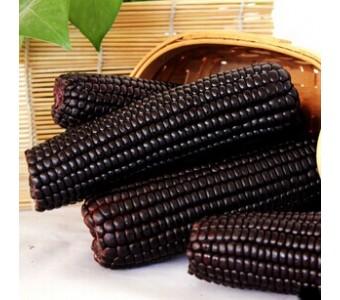 2014年首批新玉米 山西忻州一级微甜糯黑玉米棒整箱18根