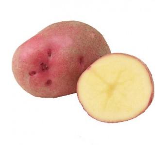陕北靖边有机马铃薯无公害非转基因新鲜洋芋土豆 红黄五斤包邮