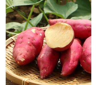 甘薯小番薯红皮黄心地瓜小红薯