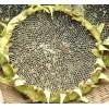 [供]出售2万斤葵花籽