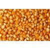[求]【天惠养殖】求购玉米