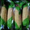 [供]真空包装甜糯玉米