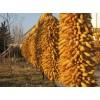 [求]求购大量玉米