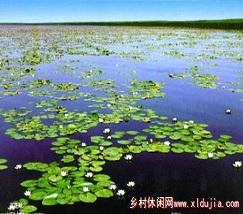 大庆莲花湖 (2)