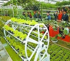 立体农业 (2)