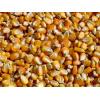 长年求购玉米、棉粕、菜粕、油糠、小麦、麸皮、大豆、高粱等饲料