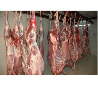 梅花鹿肉 大量批发优质活体宰杀鹿肉 鹿白条 新鲜鹿肉 规格可定制