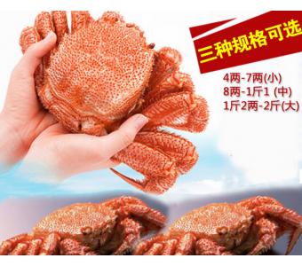 精品推荐海鲜红毛蟹 朝鲜优质毛蟹海水野生红毛蟹产地鲜活红毛蟹