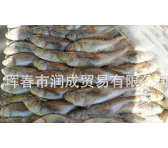 朝鲜银条鱼 银条雷鱼 朝鲜银条鱼 银条鱼