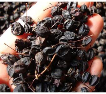 东北特产 刺五加茶 批发 安神助眠茶 中药 养生500g 刺五加籽