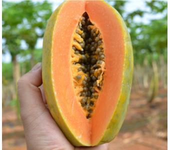 海南特产树上熟红心木瓜 新鲜水果批发 丰胸美颜 10斤装/箱可代发