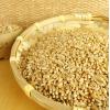 供应优质小麦